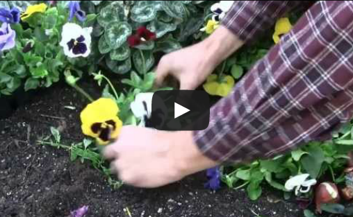 Growing Annuals and Perrenials