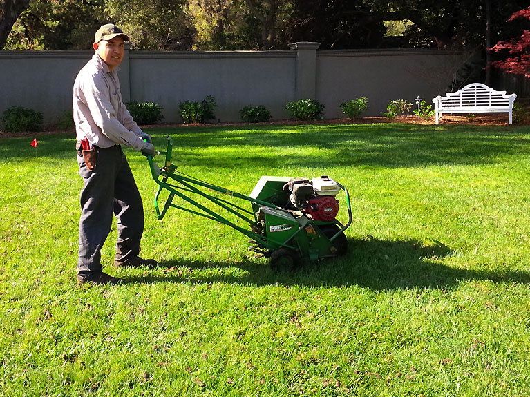 Lawn aeration in bay area gardens