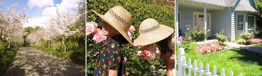 Emma Lucie Rose Garden