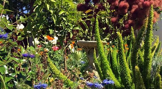 Bay Area Flower Garden No Water
