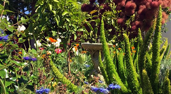 Who Says We Can T Have A Beautiful Flowering Garden Without A Lot